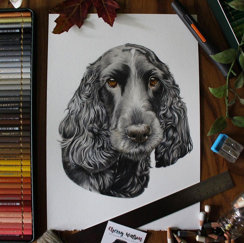 Colored Pencil Dog Portrait